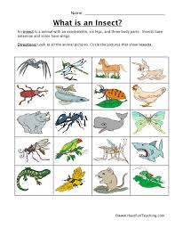 insect classification worksheet have fun teaching