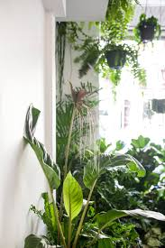 liven up your pad with plants indoor plants hunter valley