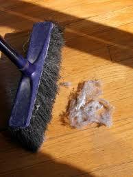 Hardwood Floor Broom Photo Page Hgtv