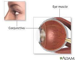 Behind The Ear Anatomy Eye Muscle Repair Series U2014normal Anatomy Medlineplus Medical