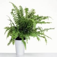 plante d駱olluante bureau plantes dépolluantes pour votre bureau ou votre intérieur de