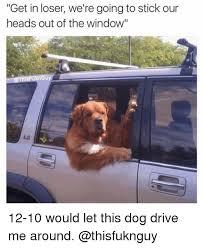 Dog Driving Meme - 25 best memes about dog driving dog driving memes