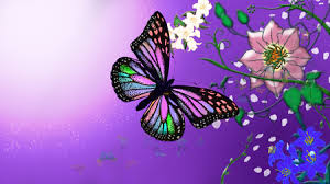of flowers and butterflies flowers wallpaper id 654378 desktop