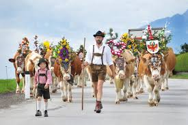 fall for tirol cattle and sheep parades in september austria fall