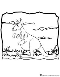 baby kangaroo coloring pages kids coloring