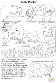 florida panther coloring page free printable coloring pages