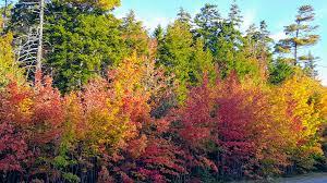 fall foliage maine martha stewart blog