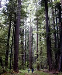 Oregon Forest images Forest protection and restoration oregon wild jpg