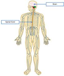 Images Of Human Anatomy And Physiology Understanding The Basic Anatomy And Physiology Of The Human Body
