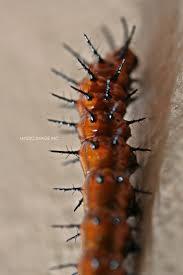 film larva jam berapa 40 best animals images on pinterest animales text photo and animais
