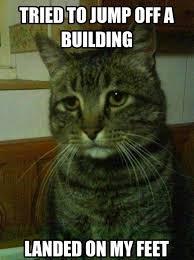 Feel Better Meme - simon the depressed cat is my new favorite meme pophangover