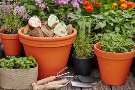 miracle grow herb garden zandalus net