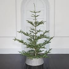 fresh cut natural noble fir terrain