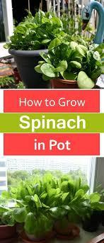 best 20 herb planters ideas on pinterest growing herbs 27 best balcony wall herb garden images on pinterest gutter garden
