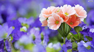 opulent beautiful flowers wallpapers safety equipment us