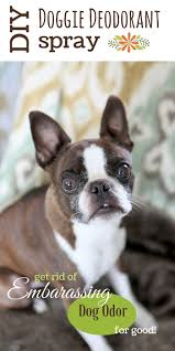 56 best dogs images on pinterest dog kennels diy and dog houses