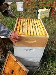 litchfield county beekeeper wins award says general interest in