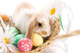 bunny easter basket easter bunny in a basket with eggs stock photo colourbox