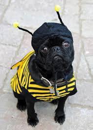 Halloween Costume Ideas Dogs 125 Pets Halloween Costumes Images Animals