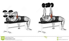 exercising extension arms with dumbbells lying stock illustration