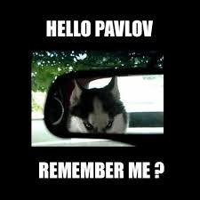 Psych Meme - 10 memes psychology students will love
