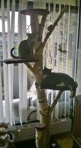 Cool Cat Furniture Best 25 Homemade Cat Tower Ideas Only On Pinterest Diy Cat Tree