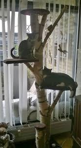 best 25 cat trees ideas on cat trees diy