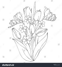 vector monochrome contour illustration daffodil narcissus stock