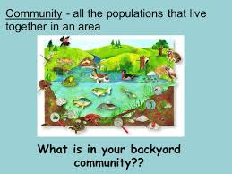 principles of ecology eq what are the interactions between the
