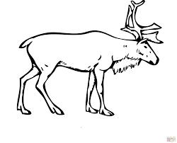 brilliant reindeer coloring deer reindeer coloring