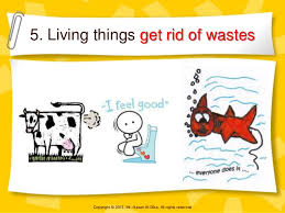things to get rid of living non living things