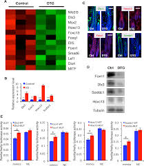 Stem Cells Hair Loss Post Transcriptional Regulation Of Keratinocyte Progenitor Cell