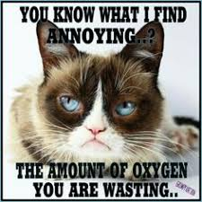 No Meme Grumpy Cat - pin by david lee on grumpy cat pinterest grumpy cat and humor
