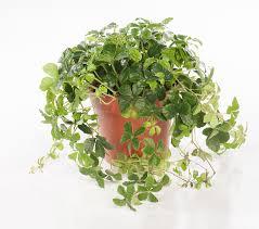 Plante Artificielle Exterieur Ikea by Plante Tuteur