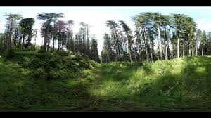 forest glade 360 degree video forest glade youtube