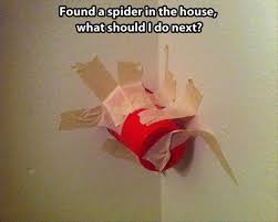 Red Solo Cup Meme - red solo cup spider meme by devious1 memedroid
