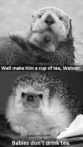 Cumberbatch Otter Meme - cumberbatch otter meme