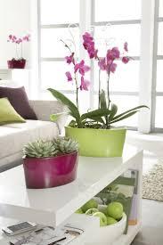 Inside Plants by 13 Best In Door Plants Images On Pinterest Plants Indoor Plants