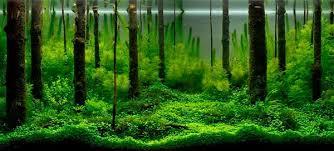 amano aquascape axolotls et cie aquascaping