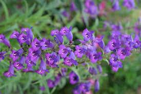 purple flowers free picture small purple flowers