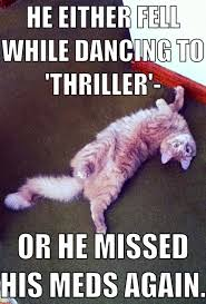 Crazy Cat Memes - bad dancer or crazy cat meme guy
