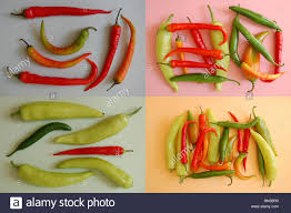 assorted red orange light green mexican chilies four color stock