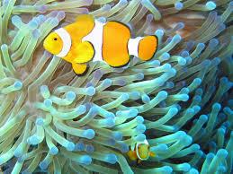 free images water nature ocean underwater orange tropical