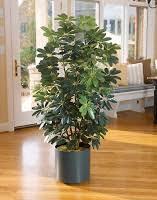floor plants home decor bellarosa designs flower for decor artificial silk floor plants
