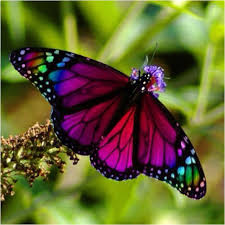 colourful pictures of butterflies butterflies colourful