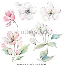 hand drawn apple tree branches flowers stock illustration
