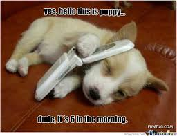 Cute Puppies Meme - cute puppy memes best collection of funny cute puppy pictures