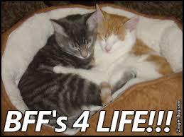 Cat Hug Meme - bffs 4 life hugging kittens glitter graphic greeting comment meme