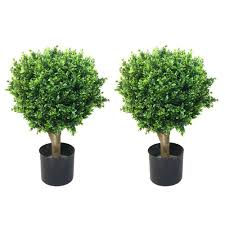 romano 2 ft hedyotis topiary trees 2 pack 50 10008 r the home