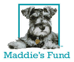 maddie s maddie s fund grants 4 million to support pet lifesaving training
